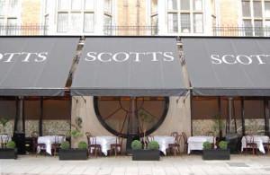 scotts-1-scotts